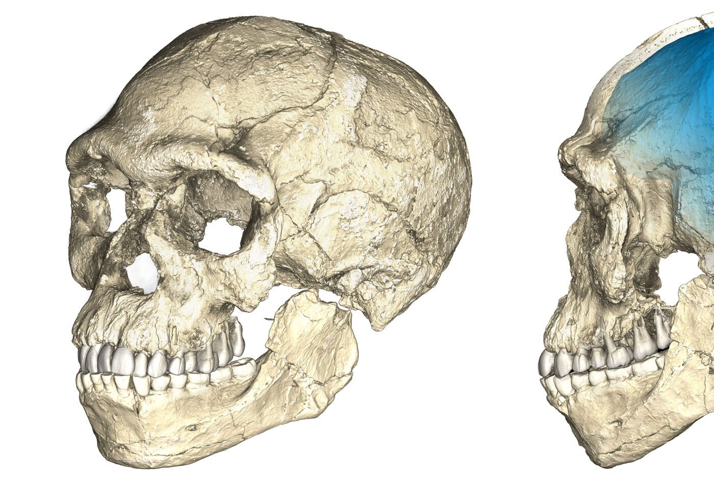 The story of human evolution in Africa is undergoing a major