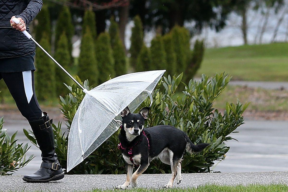 Washington State Wet Weather