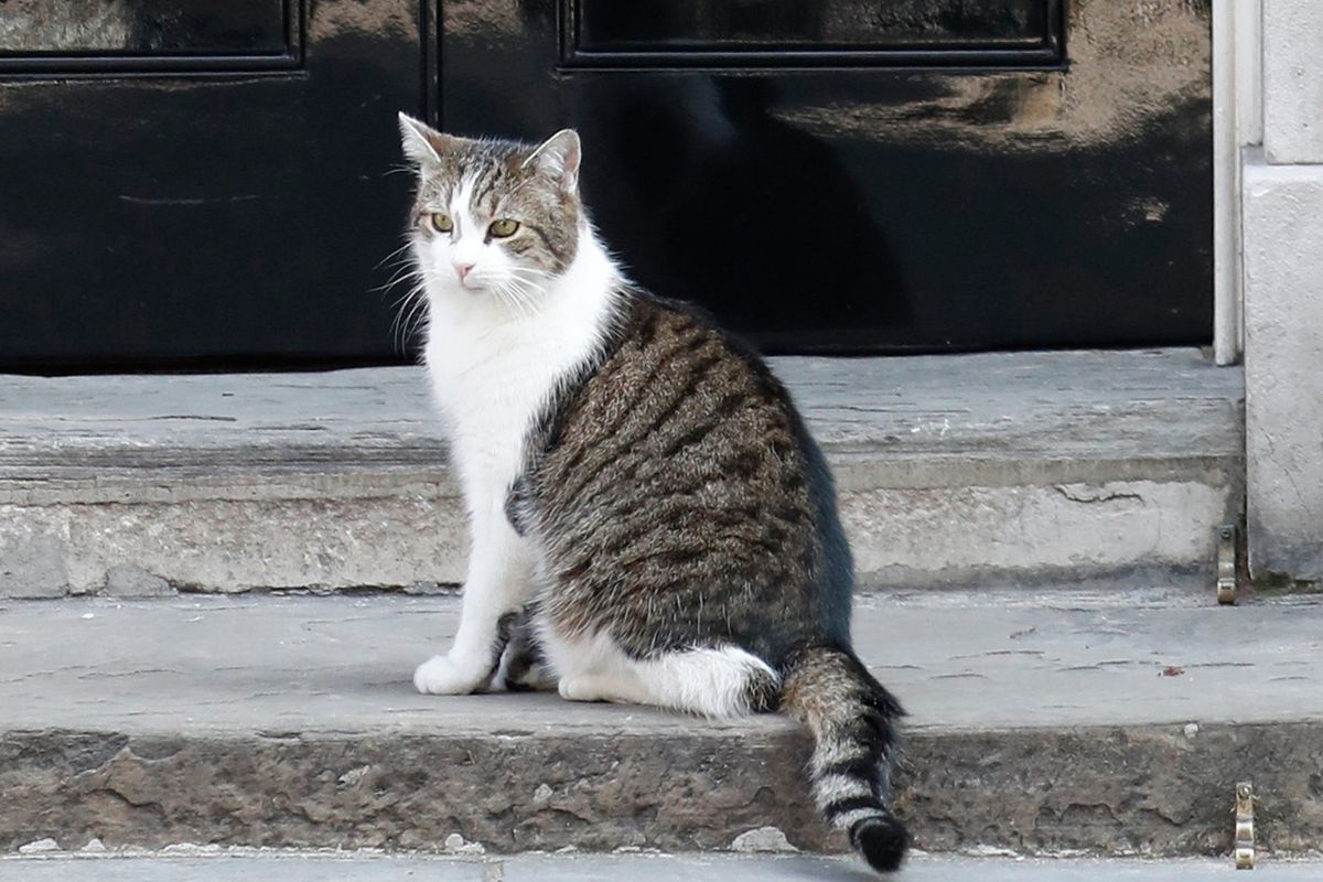 Larry the cat stole the show ahead of Theresa May's resignation speech -  Deseret News