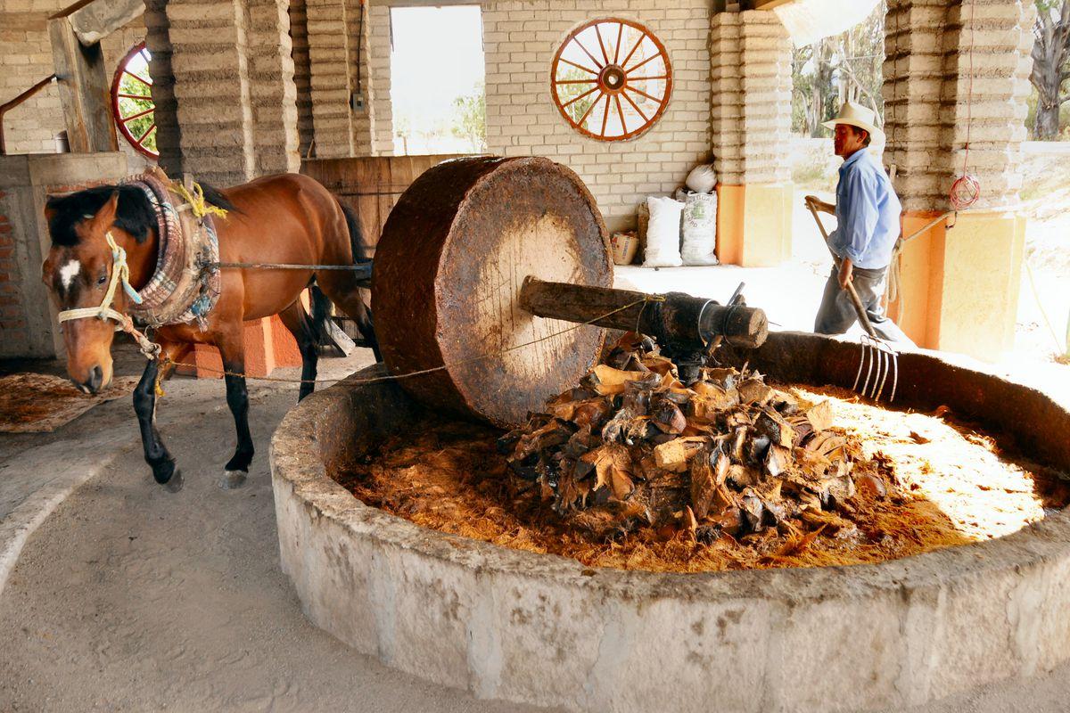Mezcal production in Oaxaca, Mexico.