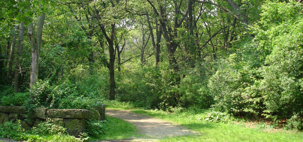 Trees line a path through Boston's Franklin Park