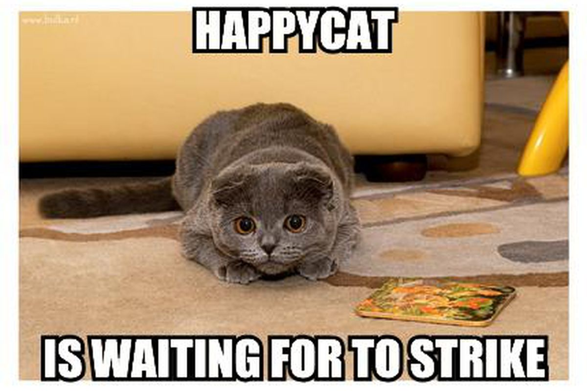 """HappyCat has more patience than I do.  (via <a href=""""http://icanhascheezburger.files.wordpress.com/2007/07/happycat-is-waiting-for-to-strike.jpg"""">icanhascheezburger.files.wordpress.com</a>)"""