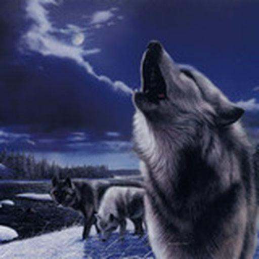 wolfmanshowlforever