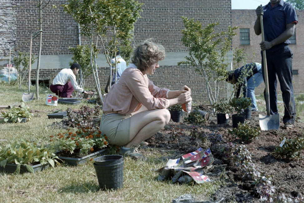 A group of people helping to plant flowers.