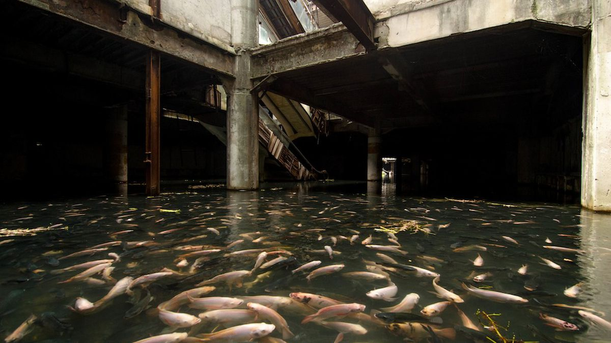an abandoned mall in bangkok has been overtaken by fish the verge