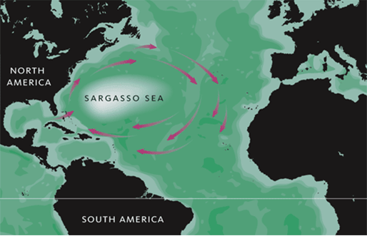 Sargassum seaweed in ocean stretches from Gulf of Mexico to