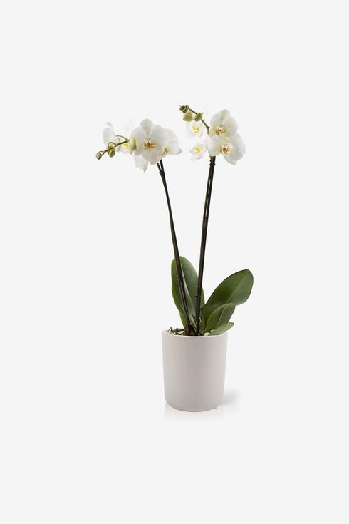 White planter with a tall white plant and a few leaves.