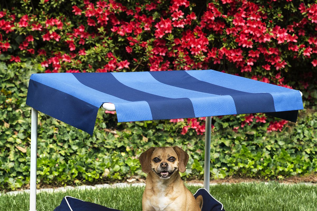How To Build An Outdoor Dog Bed This Old House