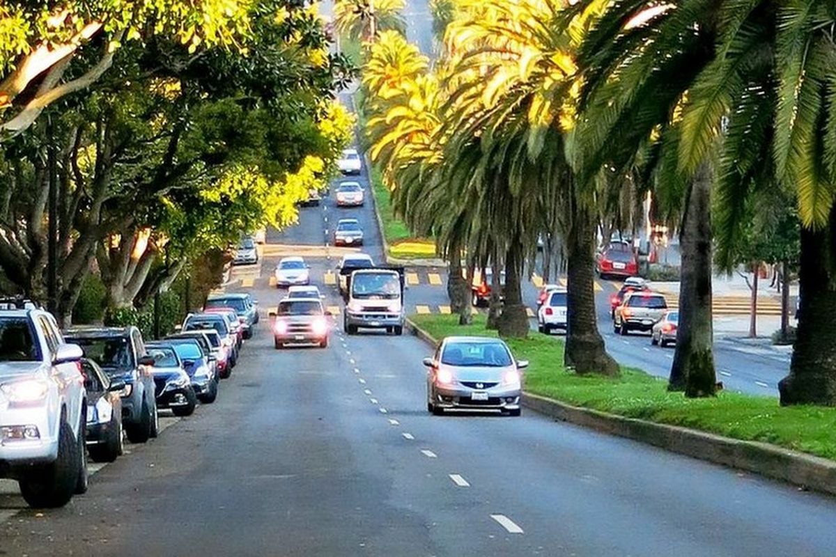 Palm trees and cars lining Dolores Street.