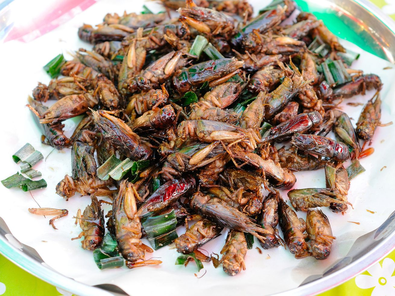 How To Eat Fried Worms Interactive Notebook Novel Unit Study Activities  Download