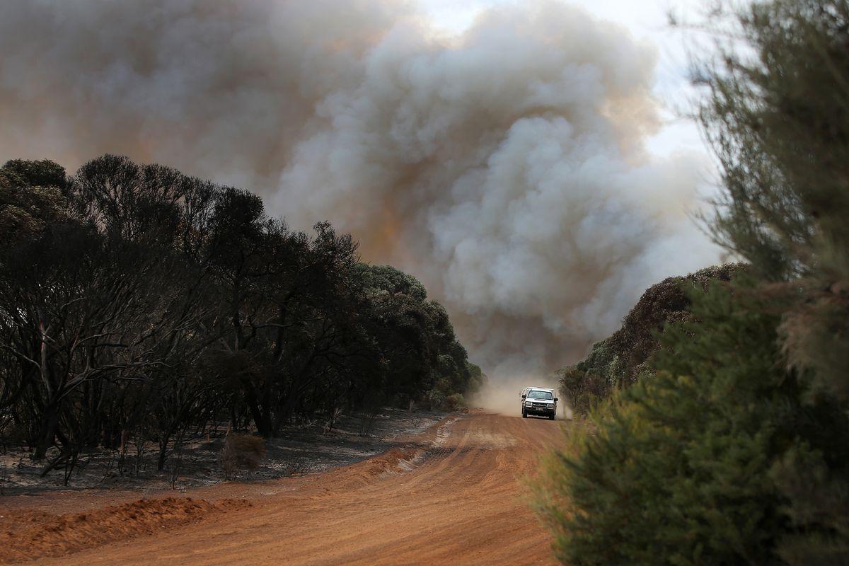 Kangaroo Island Farmers Count Livestock Losses As Bushfires Continue To Burn