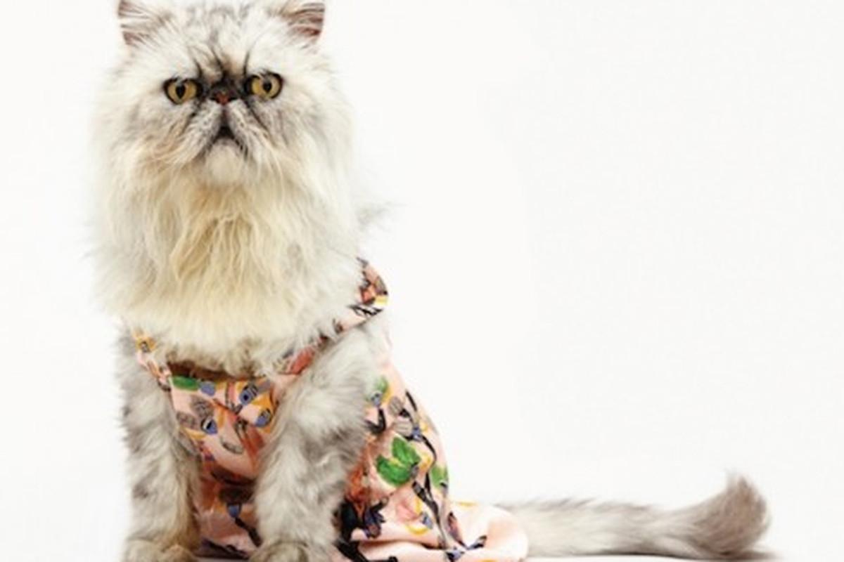 Meow, via Racked NY