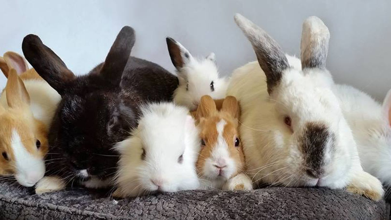 Fluffy Bunnies Are the Star of London's Latest Pop-Up ...