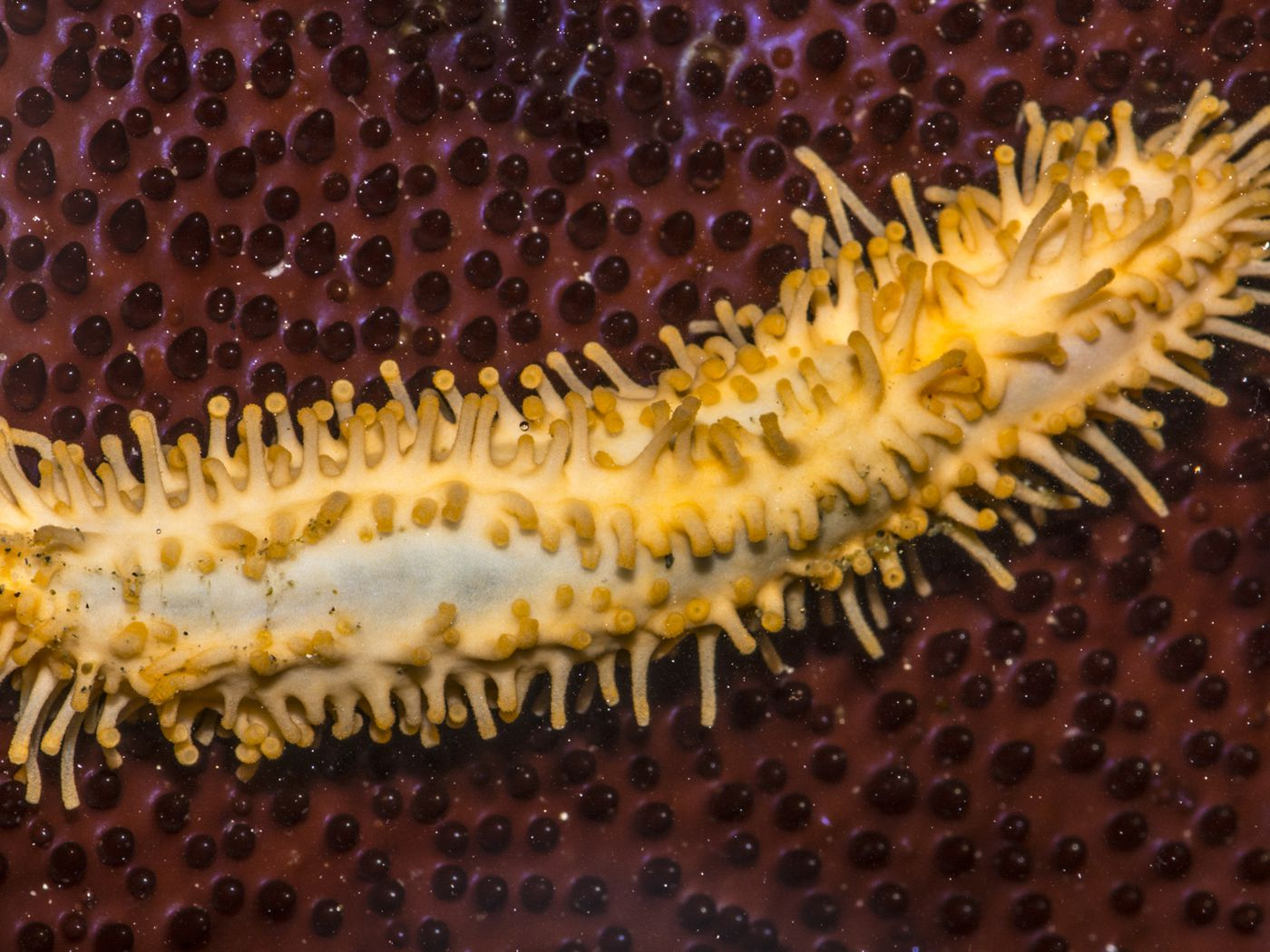 The Verge Review Of Animals The Sea Cucumber The Verge