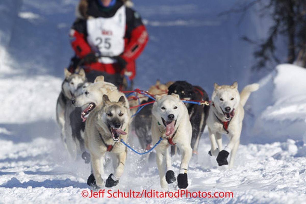 Sunday, March 4, 2012 Paul Gebhardt's team drops onto Long Lake at the restart of Iditarod 2012 in Willow, Alaska. By Jeff Schultz / AlaskaStock.com