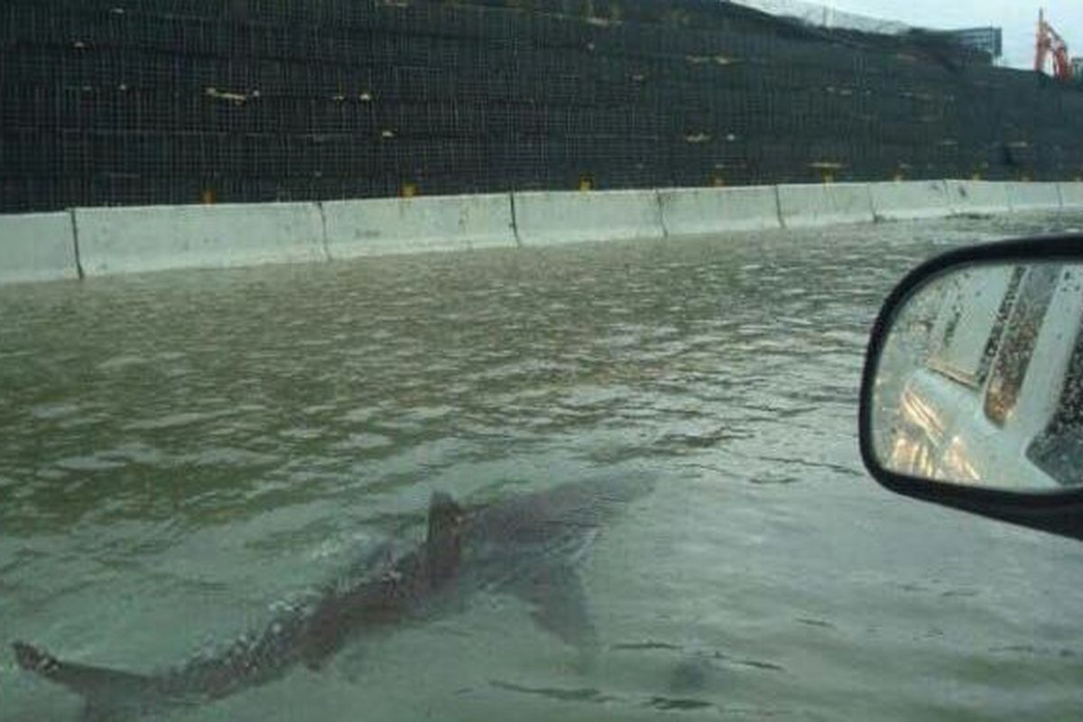The viral hoax of a shark swimming down a Houston highway. Photo: Twitter