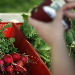 Radishes at a past farmers market at Pioneer Park in Salt Lake City.
