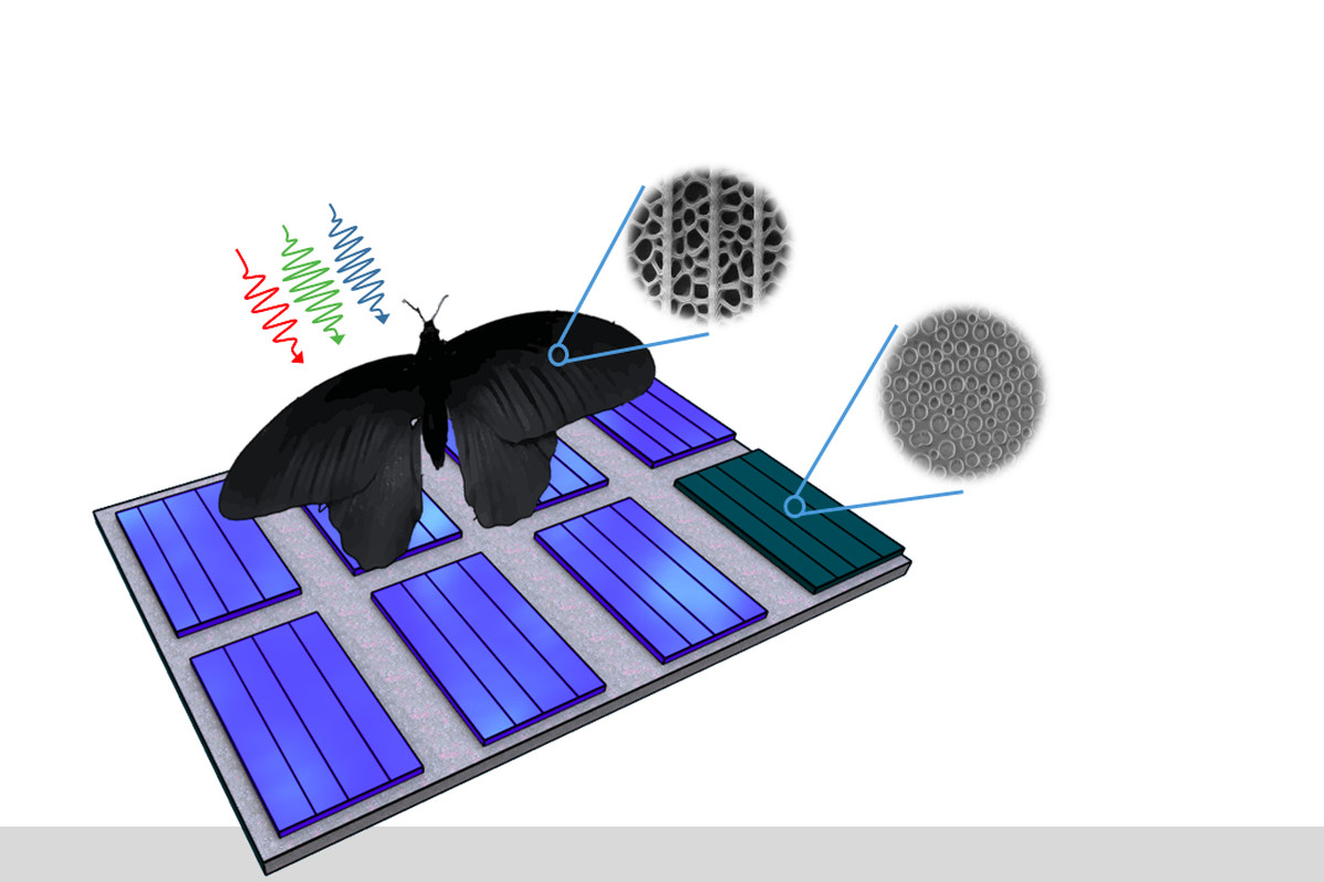 Butterfly Wings Inspire A Better Way To Absorb Light In Solar Panels Panel Design Guidelines Scientists From Kit And Caltech Utilize The Disordered Nanoholes Of Black Improve Cell Performance Image Radwanul Hasan Siddique
