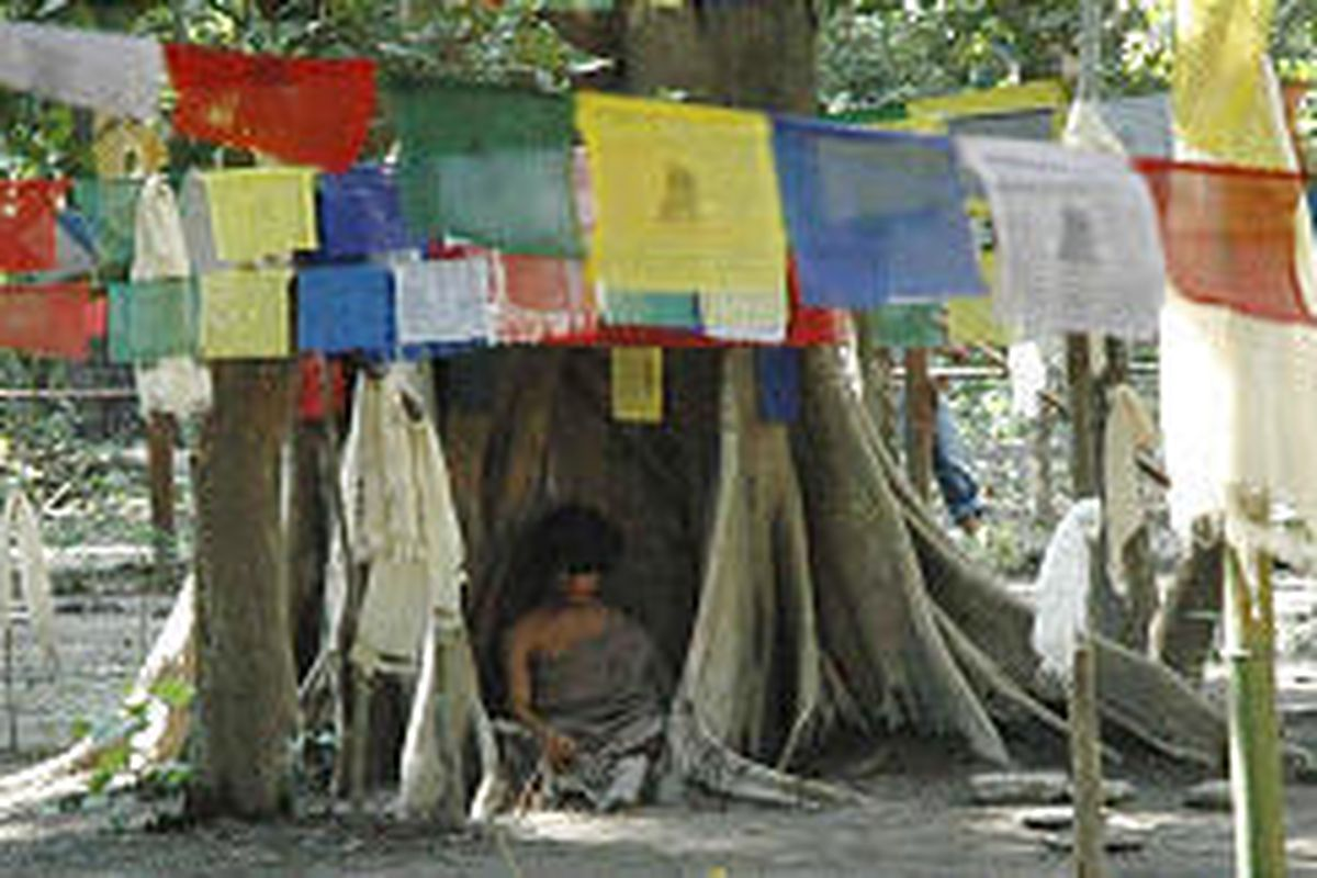Ram Bahadur Banjan, 15, meditates in a niche in a Nepalese jungle. He has reputedly been doing so without food or water since May.