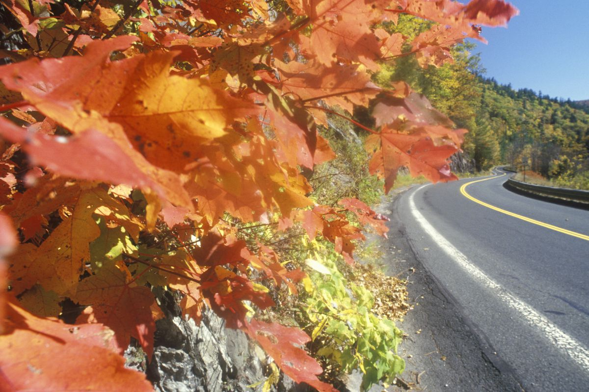 A gorgeous closeup of orange leaves overhanging an empty two-lane highway on a mountain.