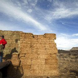 Speaker of the House Scott Bedke loads hay on the family's ground in Oakley, Idaho.
