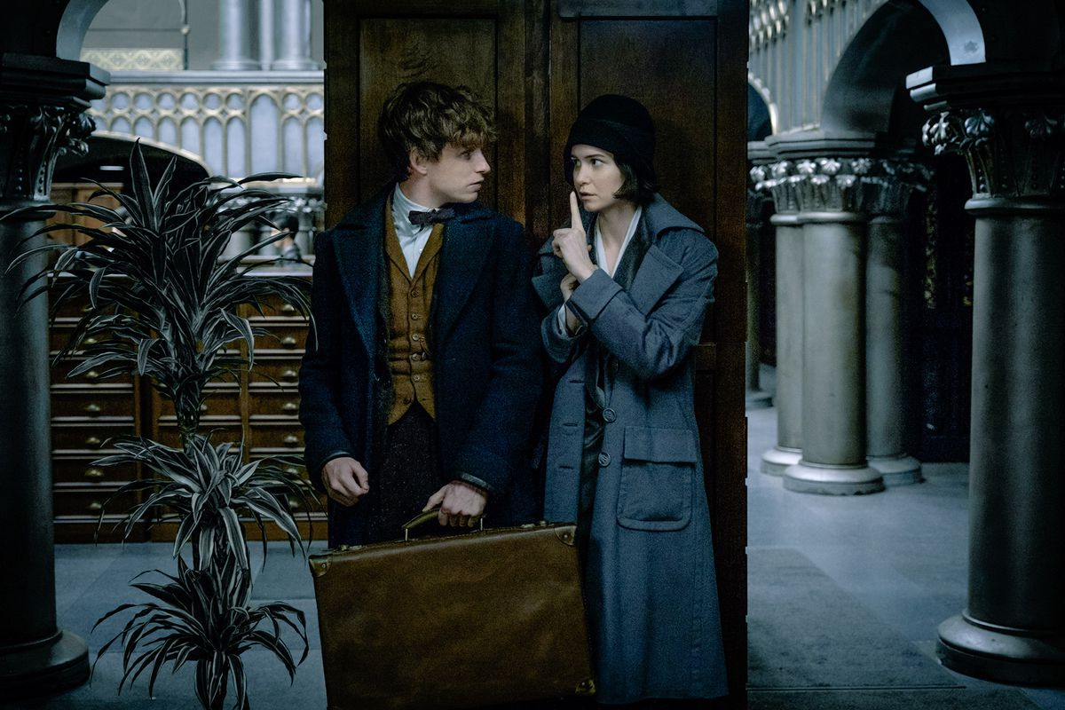 Fantastic Beasts and Where to Find Them - Newt / Tina