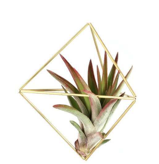 Gold diamond-shaped geometric mobile with green and red spiky plant