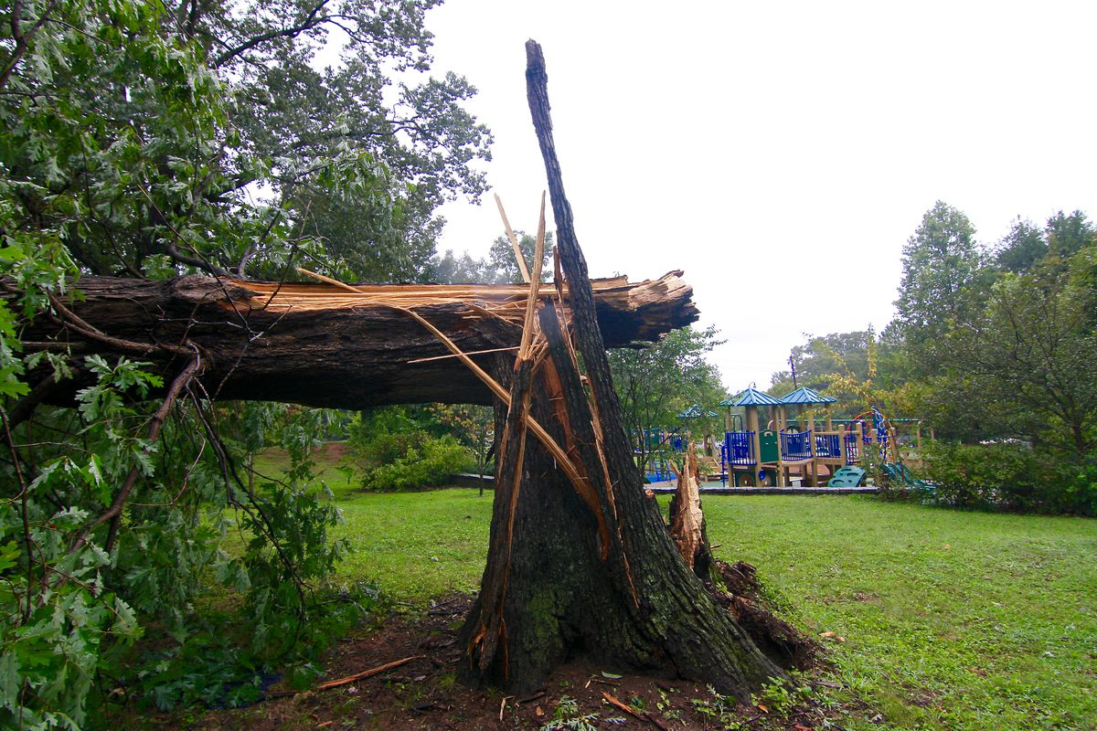 A large tree fallen in the middle of Poncey-Highland Playground in Atlanta.