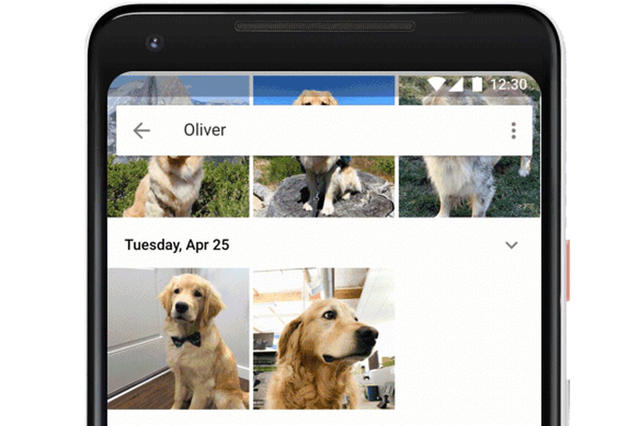 google photos now recognizes your pets