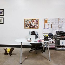 """<a href=""""http://la.racked.com/archives/2014/02/19/agains_adorable_dtla_studio_is_retroheavy_dogfriendly.php""""><b>AGAIN</b></a>'s dog-friendly digs."""