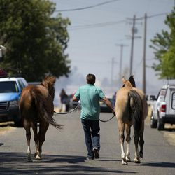 Horses accompany their owner down El Modena Ave. as firefighters tend to a nearby grassfire in Elverta, Calif., on Monday, July 27, 2015.