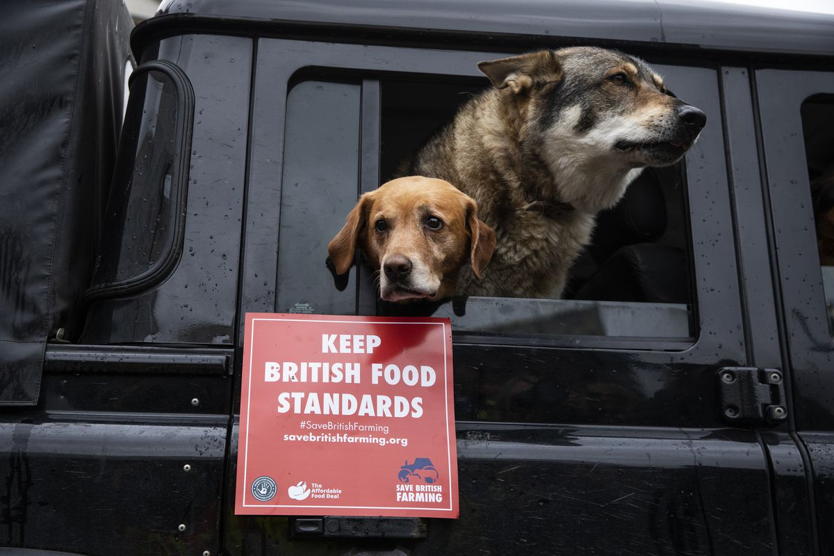 """Two dogs in a car, one holding a red sign saying """"Keep British Food Standards"""""""