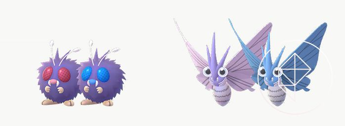 Venonat and Venomoth standing near their Shiny versions, which both turn blue
