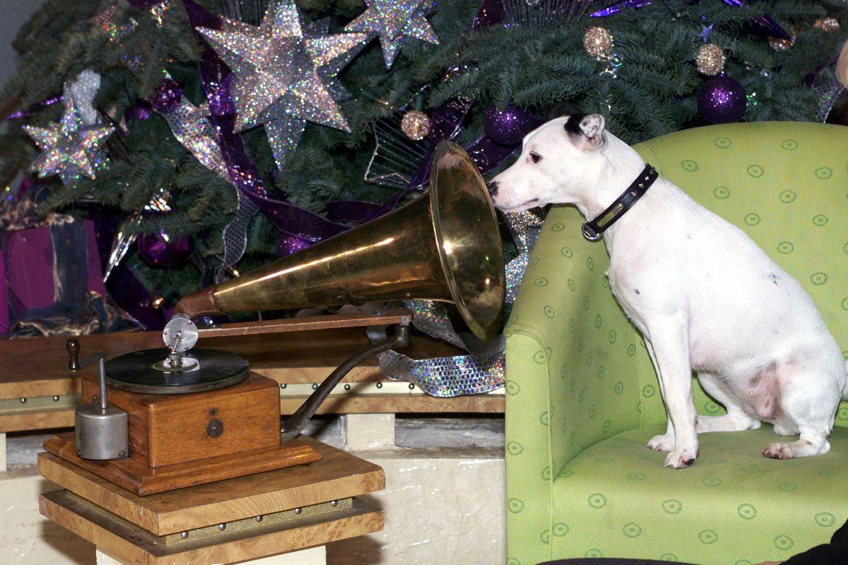 HMV/New Dog/1