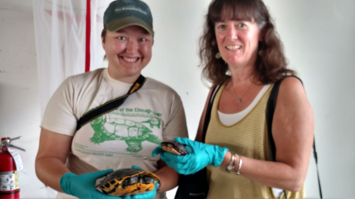 Claire Snyder, conservation programs specialist for Friends of the Chicago River (left), and Margaret Frisbie, executive director of Friends of the Chicago River, hold radio transmitters on turtles until the epoxy sets.<br>Credit: Dale Bowman