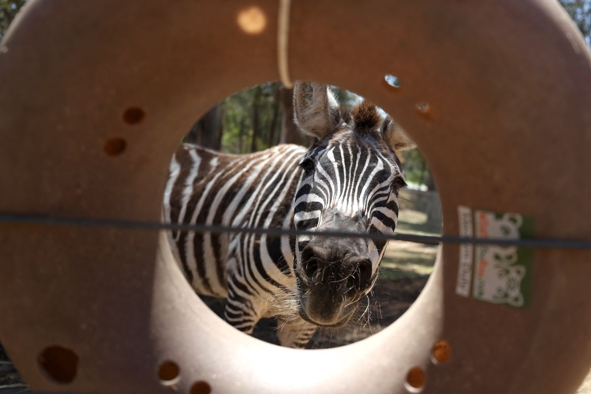 Oakland Zoo Nears Bankruptcy As Coronavirus Forces Extended Closure