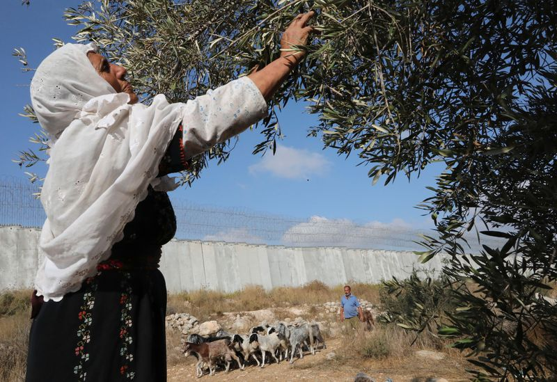 PALESTINIAN-ISRAEL-CONFLICT-HARVEST