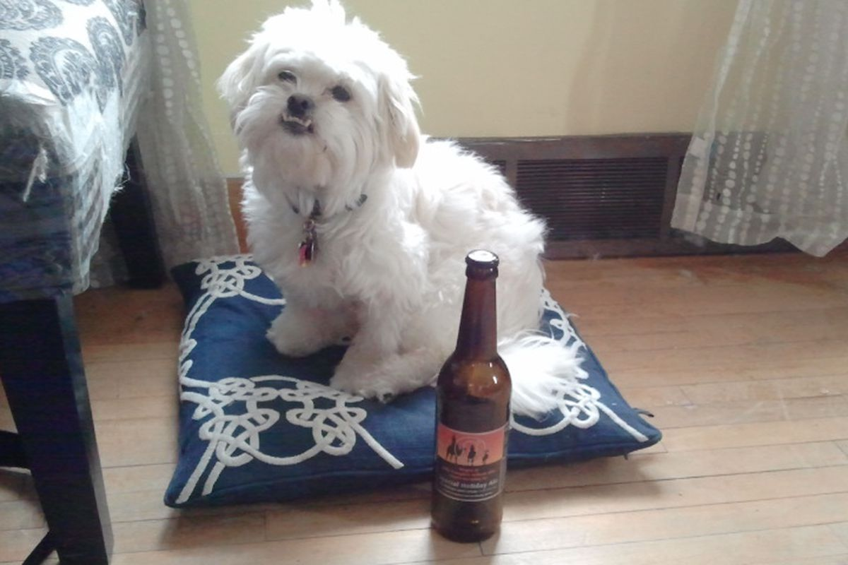 Bax is ready to talk beer.