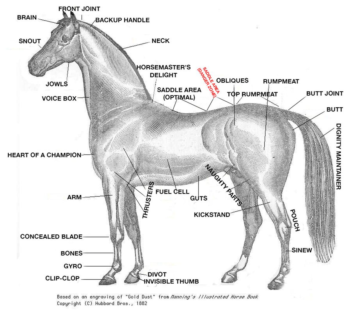 A Crash Course In Horse Anatomy For The 2015 Kentucky