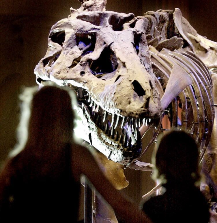 Spectators view Sue, the largest and most complete Tyrannosaurus rex skeleton ever found, after her unveiling at the Field Museum Wednesday May 17, 2000 in Chicago.   File