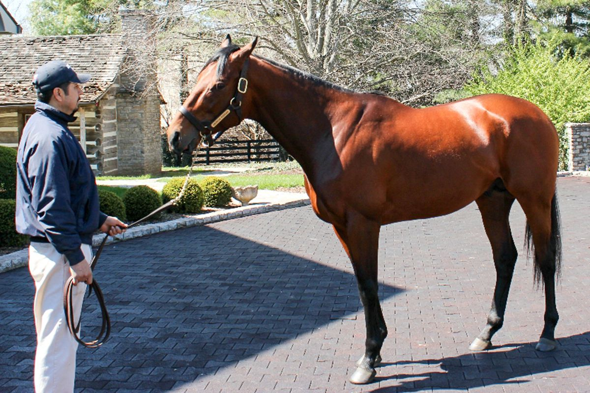 American Pharoah at the Coolmore America farm in Versailles, Ky., where he has gone to stud, on April 5, 2016.