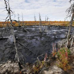 This Saturday, Sept. 10, 2011 photo shows dying trees next to an oil spill near the town of Usinsk, 1500 kilometers (930 miles) northeast of Moscow. Komi is one of Russia's largest and oldest oil provinces but ruptures in aging pipelines and leaks from decommissioned oil wells make oil spills in the region routine. Environmentalists estimate at least 1 percent of Russia's annual oil production, or 5 million tons (35 million barrels), is spilled every year. That's equivalent to one Deepwater Horizon-scale leak about every two months. Crumbling infrastructure and a harsh climate combine to spell disaster in the world's largest oil producer, responsible for 13 percent of global output. (AP Photo/Dmitry Lovetsky)