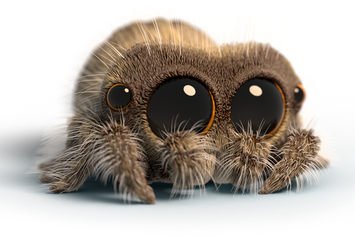 Youtubes Favorite Creature Lucas The Spider Is Getting An