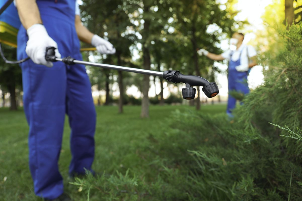 A pest control specialist wearing blue overalls uses a black wand to spray pest control solution on green shrubs.
