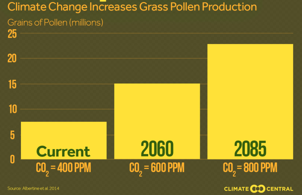 Grass pollen concentrations as the climate changes