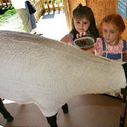 Marcia Katsikathas, left, and Erin Jenson learn how to groom a sheep at an FFA exhibit at the Utah State Fair.