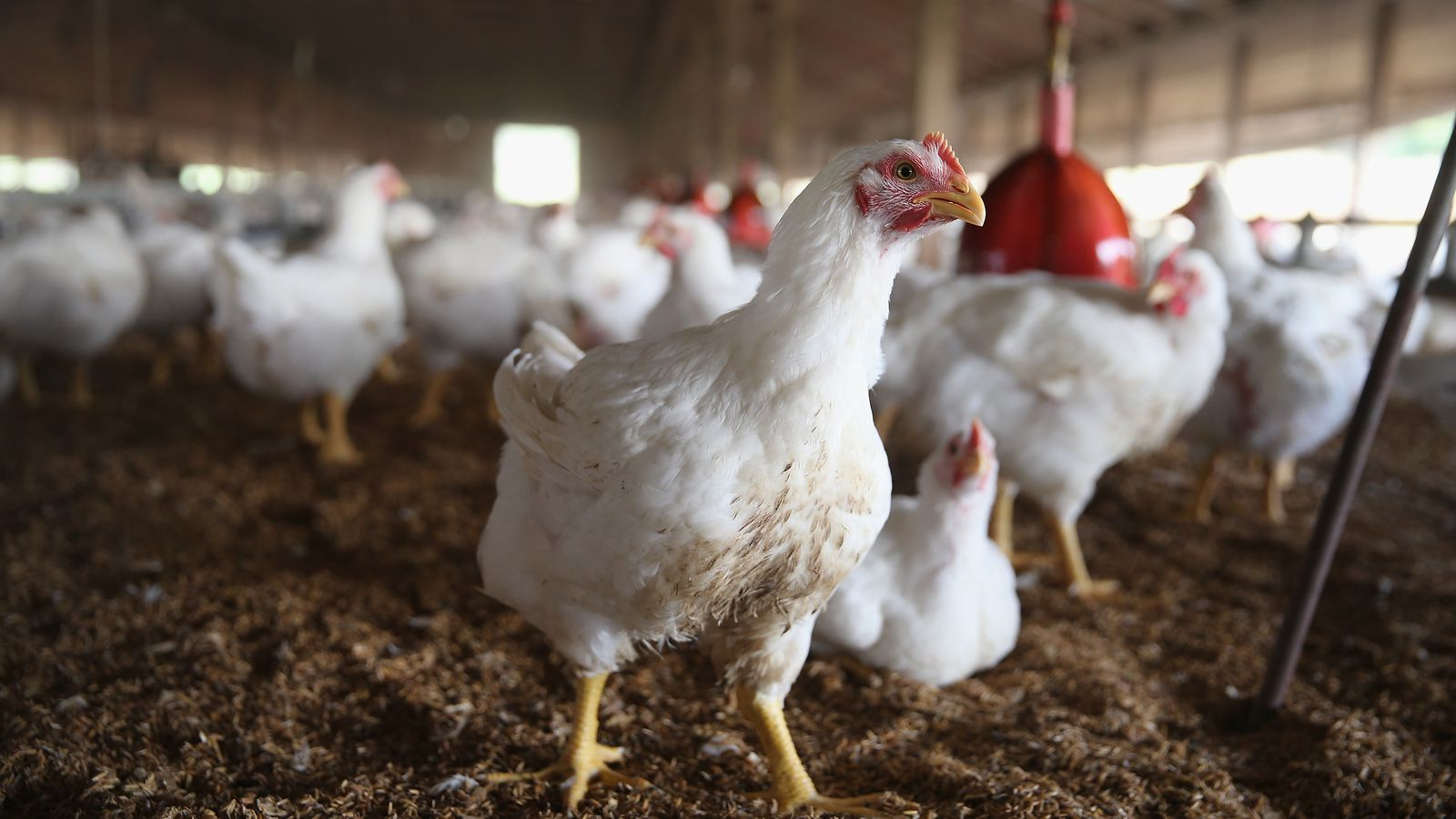 factory farming disadvantages