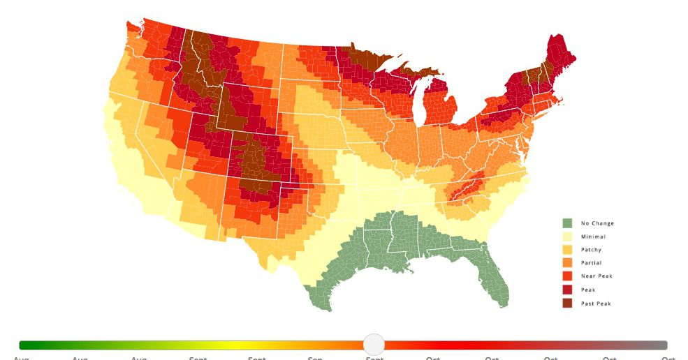 Fall Foliage Is Here Heres When You Can Expect It To Peak Where - Us map no color