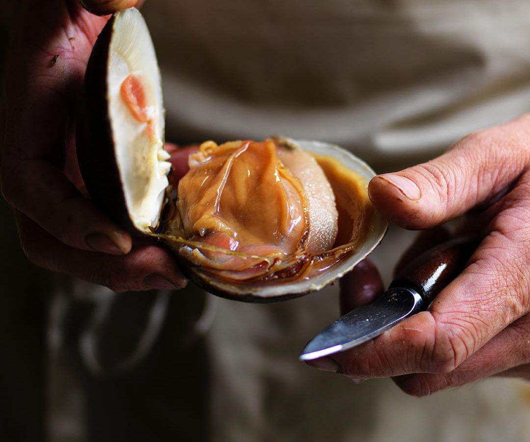 A cook's hands hold a shucking knife while presenting an opened clam in sharp focus against a dark background
