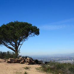 """<span class=""""credit"""">Photo: <a href=""""http://www.modernhiker.com/2013/02/28/hiking-to-the-wisdom-tree-and-cahuenga-peak/"""" target=""""_blank"""">Modern Hiker</a></span></br> ↑ <a href=""""TK"""" target=""""_blank""""><b>Cahuenga Peak, Griffith Park</b></a>: This three-mile"""
